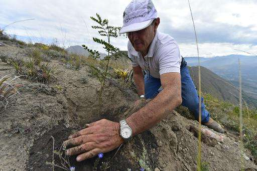 A volunteer participates in a reforestation campaign in Catequilla, Ecuador on May 16, 2015