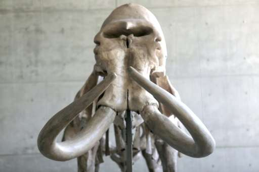 A well-preserved skeleton of a mammoth—a prehistoric creature that roamed the Earth for millions of years before dying out 5,000