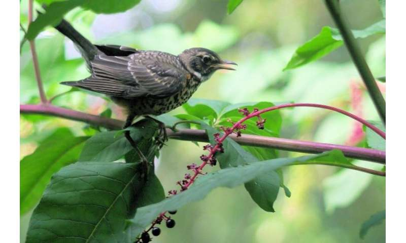 Backyard birds enhance life in urban neighborhoods