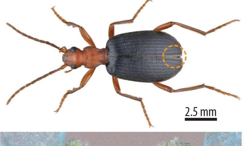 Beetlejuice! Secrets of beetle sprays unlocked at the Advanced Photon Source