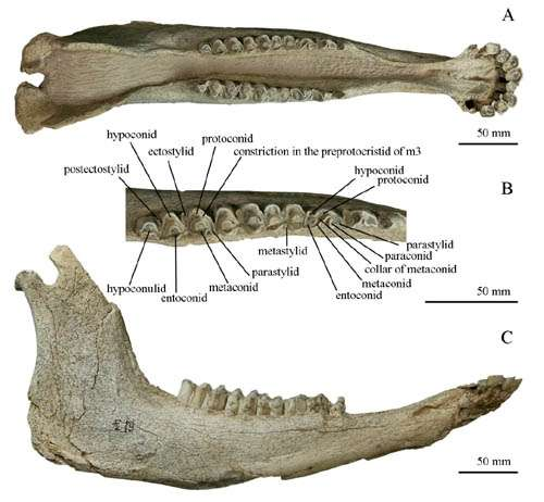 Big cats' predatory strategy reflected by a 2-million-year-old bovid fossil from Gansu, China