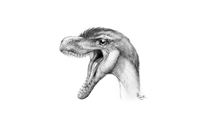 Big dinosaur discoveries in tiny toothy packages
