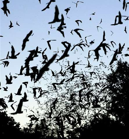 Big effort to better understand bats takes wing in 31 states
