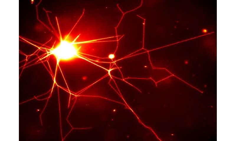 Biological tools create nerve-like polymer network