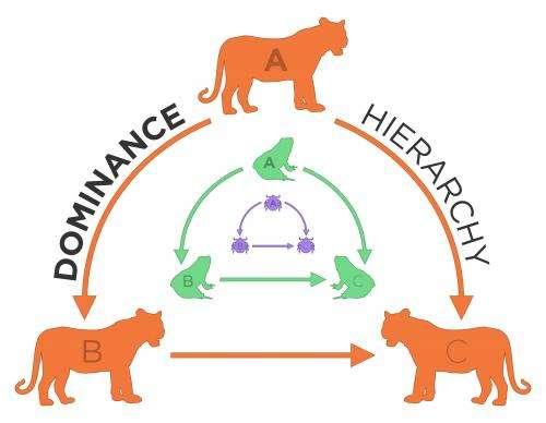 Biologist finds animal groups share dominance dynamics