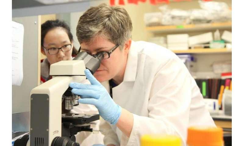 Biologist investigates how gene-swapping bacteria evade antibiotics