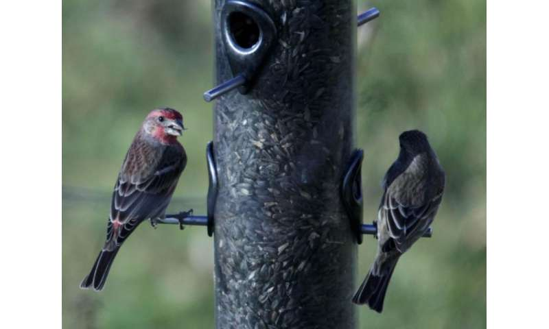 Birds spread infections at feeders, according to research