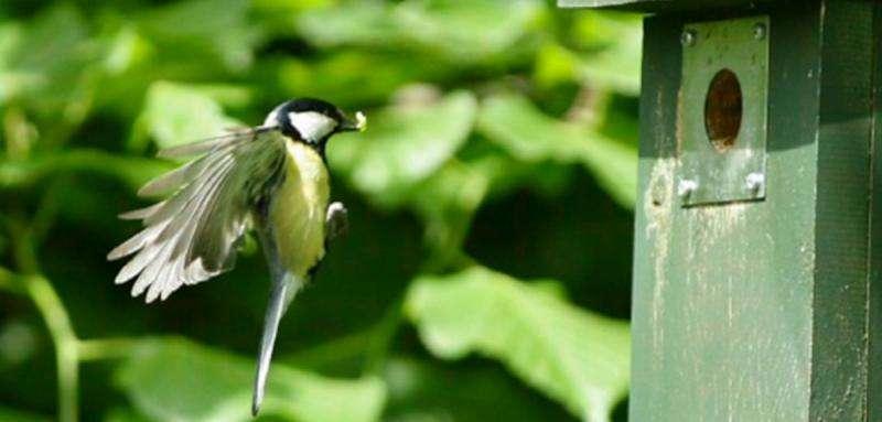 Birds time breeding to hit 'peak caterpillar'