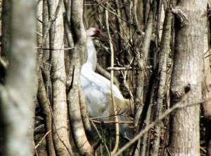 Bird study shows parent care not always best