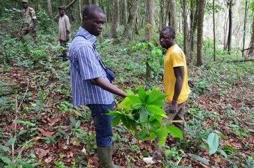 Bitter chocolate: Illegal cocoa farms threaten Ivory Coast primates