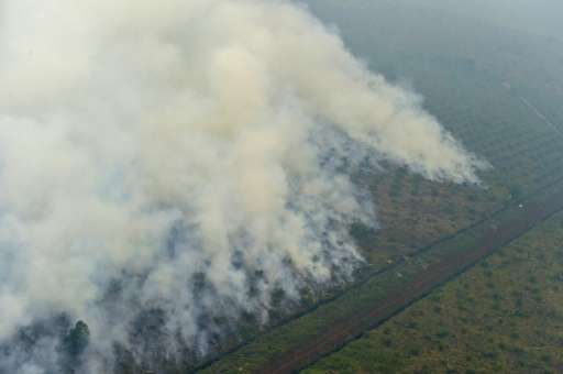 Blazes tear through Indonesia's forests annually during the dry season as fires are illegally set to clear land for cultivation