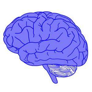 White matter structure in the brain predicts cognitive function at ages 1 and 2