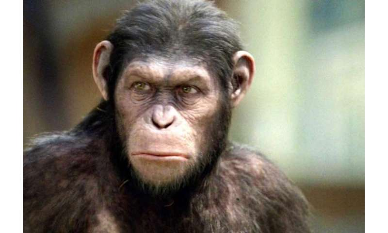 Brains, Genes, and Primates: The future of higher research on the planet of the apes.