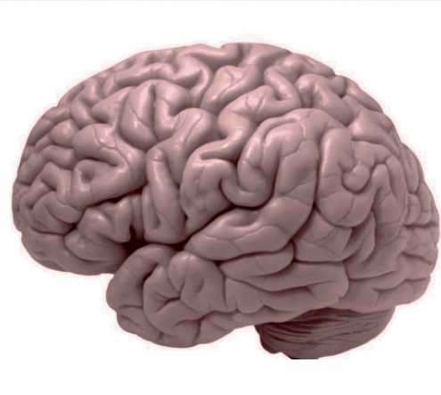 Brain's mysteries unraveled through computational neuropsychiatry