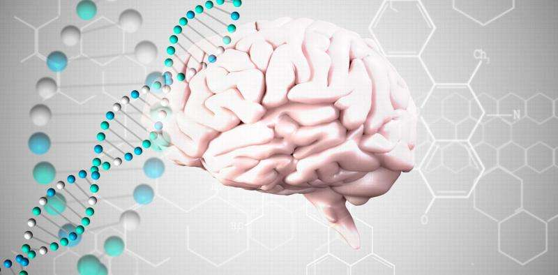 Brains work via their genes just as much as their neurons