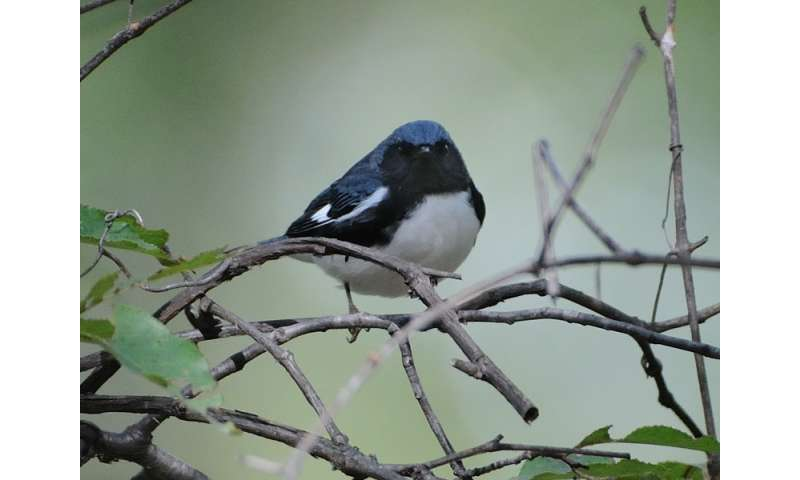 Breeding flexibility helps migratory songbirds adjust to climate warming
