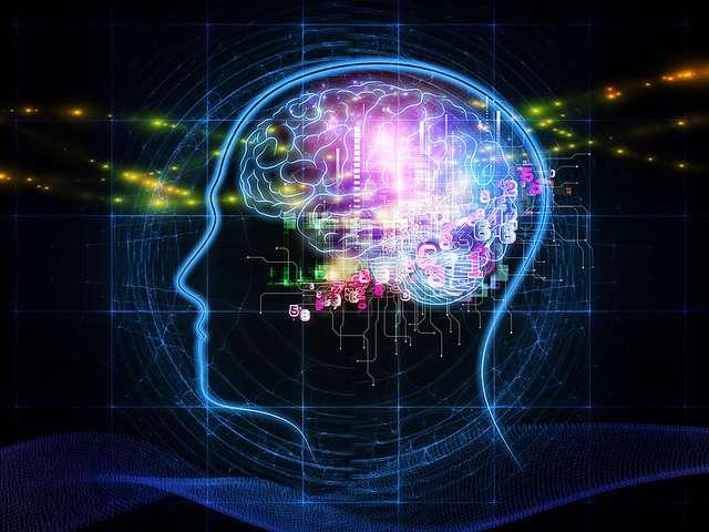 Brief postnatal blindness triggers long-lasting reorganization in the brain