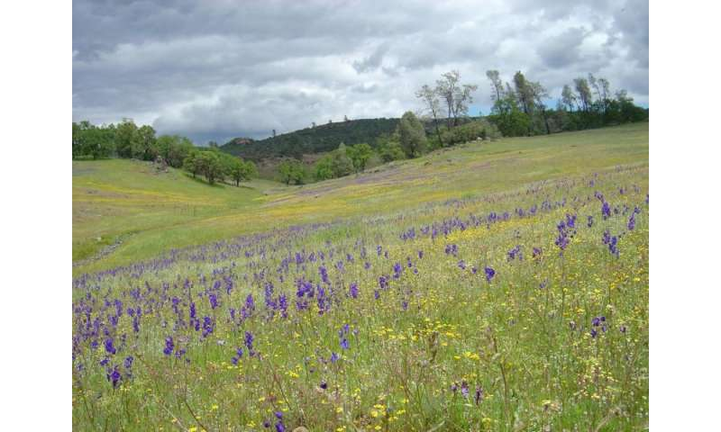 California's wildflowers losing diversity in face of warmer, drier winters