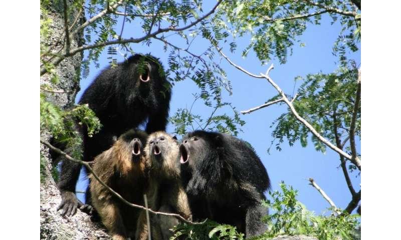 Calls vs. balls: Monkeys with more impressive roars produce less sperm