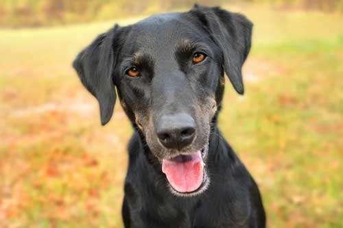Can osteoarthritis affect a dog's mood?