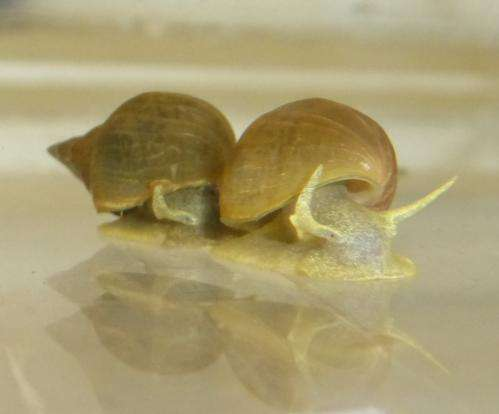 Captive breeding alters snail behaviour
