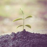 Carbon sequestration in soil: The potential underfoot
