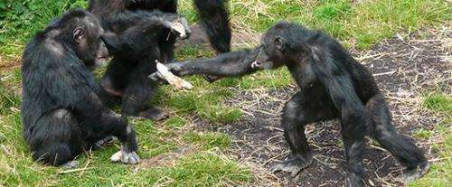 Caring and sharing is monkey business