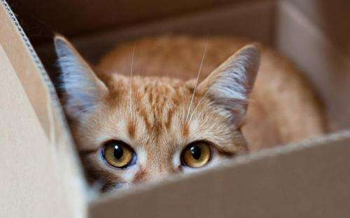 Cat shelter findings: Less stress with box access
