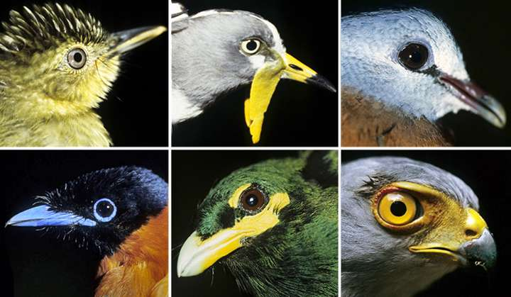 Changes in birds' ranges may greatly affect ecosystems