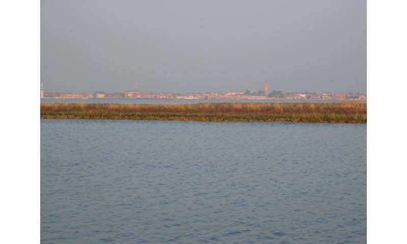 Coastal marshes more resilient to sea-level rise than previously believed