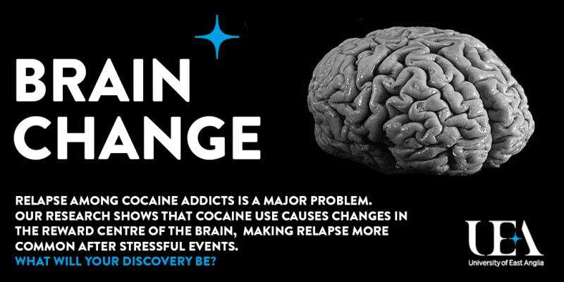 Cocaine changes the brain and makes relapse more common in addicts