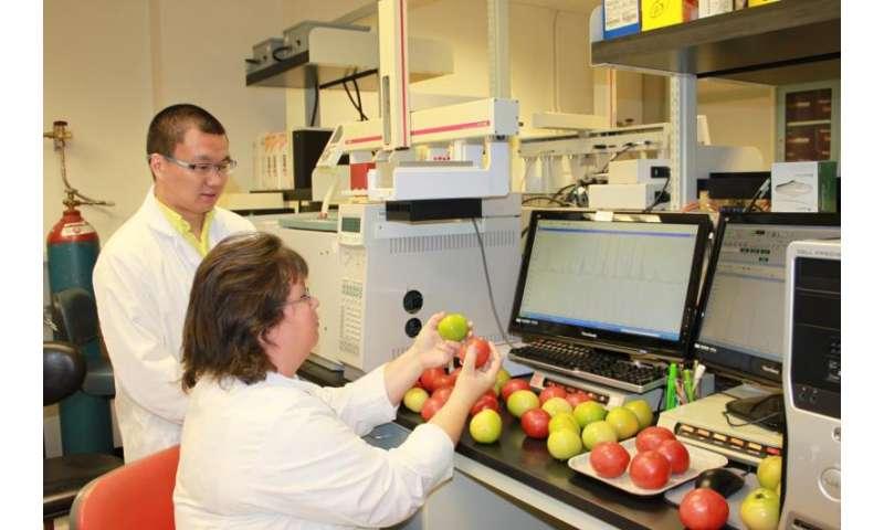 Common kitchen practices detrimental to tomato aroma