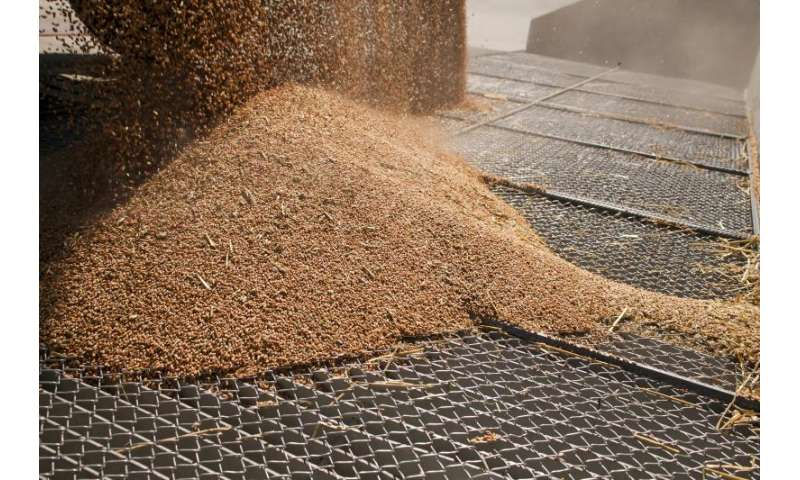 Company eliminates pests from stored grain with ozone and