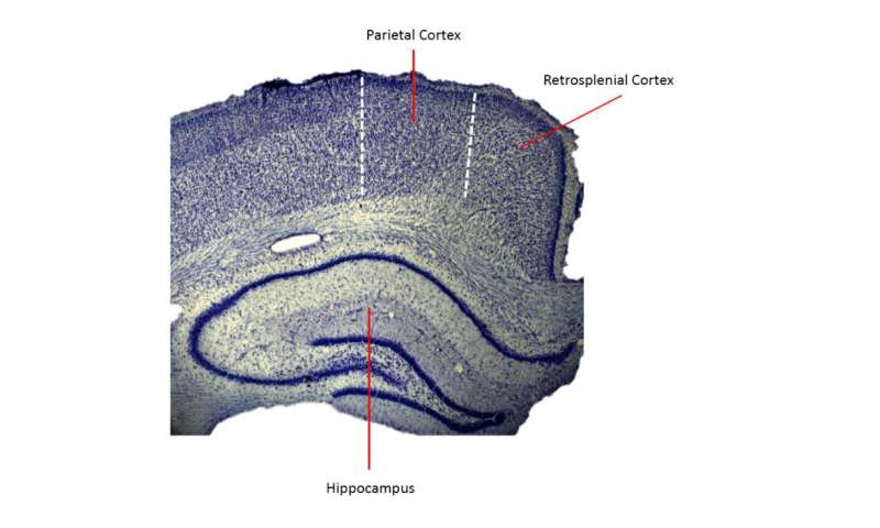 'Conjunction junction' for brain's navigation function