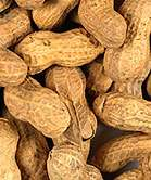 Controlled exposure to peanuts at early age shows promise as allergy treatment