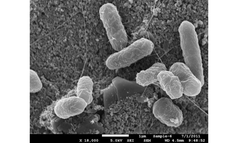 Controlling levels of specific gut bacteria could help prevent severe diarrhea