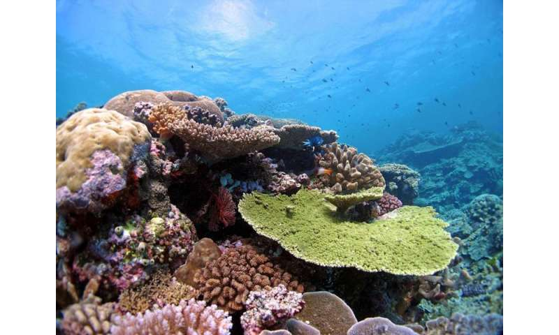 Corals are already adapting to global warming, scientists say