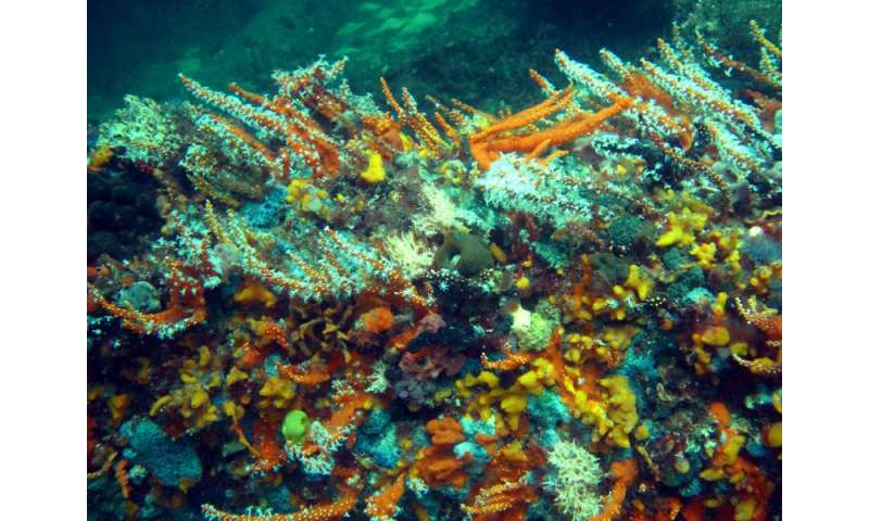 Corals vulnerable to dredging pressures