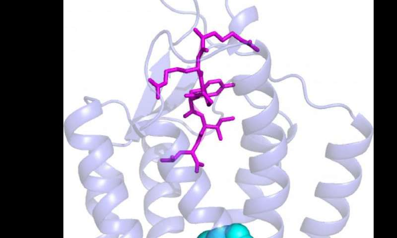 Crystal clear images uncover secrets of hormone receptors