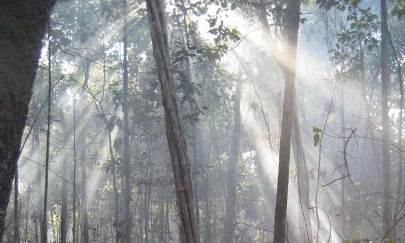 Decade-long Amazon rainforest burn yields new insight into wildfires