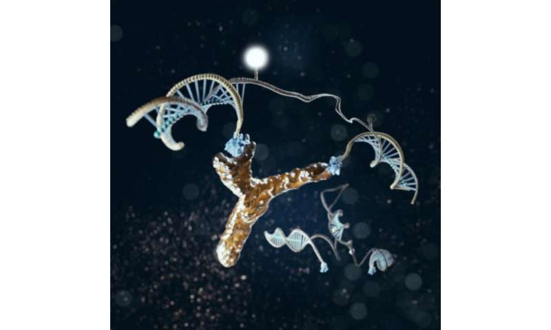 Detecting HIV diagnostic antibodies with DNA nanomachines