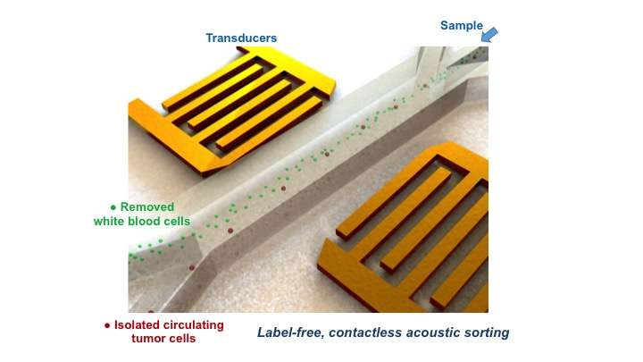 Device extracts rare tumor cells using sound