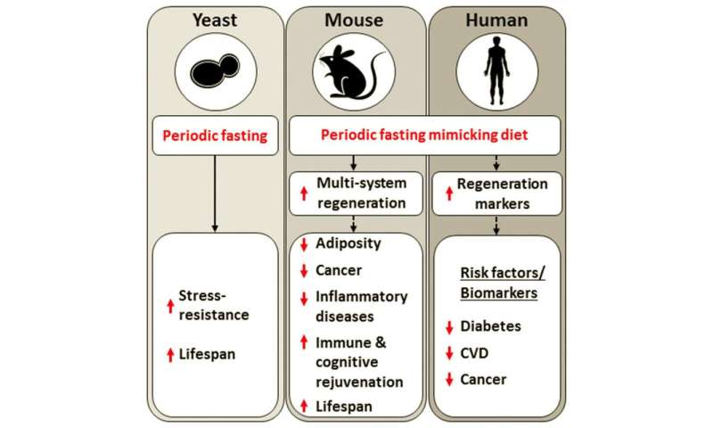 longo fasting mimicking diet for cancer