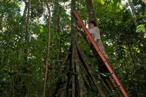 Direct evidence that drought-weakened Amazonian forests 'inhale less carbon'