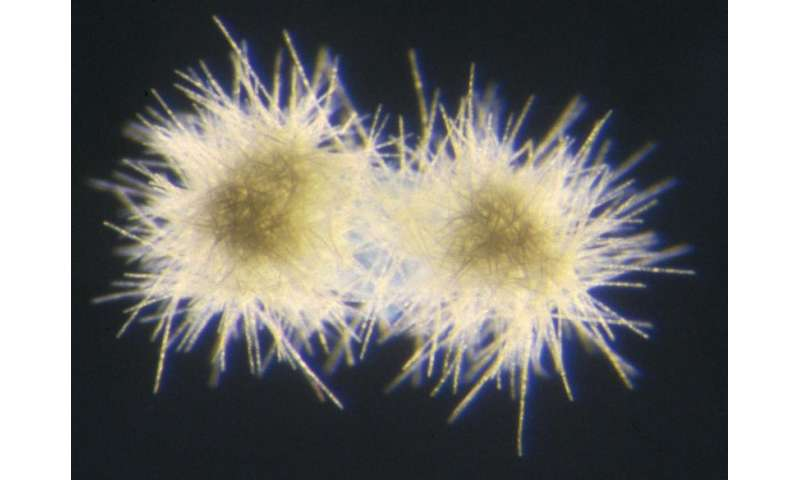 DNA of bacteria crucial to ecosystem defies explanation