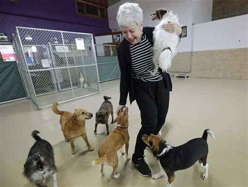 Dog flu outbreak gained foothold at urban doggie day cares
