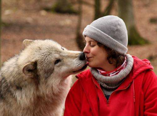 Dog-human cooperation is based on social skills of wolves