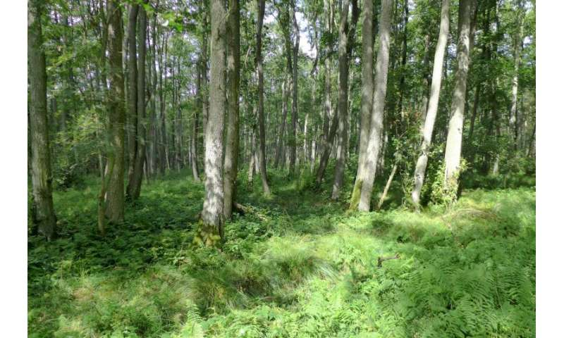 Drivers of temporal changes in temperate forest plant diversity