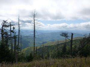 Drought Implicated In Slow Death Of Trees In Southeastern Forests
