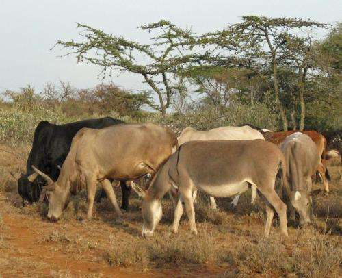 Early herders' grassy route through Africa